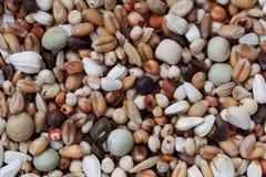 Mischung von Körnern und von Samen lizenzfreies stockfoto