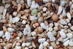 Mischung von Körnern und von Samen lizenzfreie stockbilder