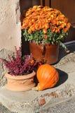 Mischung von schönen Fallterrassenblumen Lizenzfreie Stockbilder