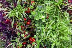 Mischung von verschiedenen Grünpflanzen und von roten Blumen lizenzfreie stockfotos