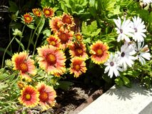 Mischungs-Blumen Stockfoto