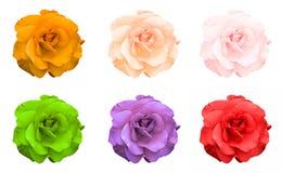 Mischungscollage von rosafarbenen Blumen: Säure stieg, Veilchen, saures Grün, stieg, Orange, grünen lokalisiert Stockfotos