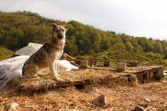 Mischzucht-Hund sitzt im Freien auf Berg Stockfotos