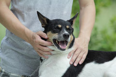 Mischzuchthund. Lizenzfreies Stockbild