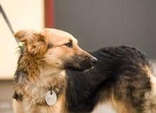 Mischzuchthundeporträt im Freien Stockbild
