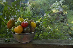 Miscuglio del pomodoro di cimelio Fotografia Stock