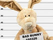 Misdadig konijntje stock afbeelding