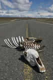 Mise à mort de route sur l'omnibus de Patagonia Photo libre de droits