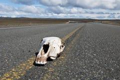 Mise à mort de route sur l'omnibus de Patagonia Image stock