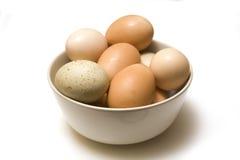 misek jaja świeże Zdjęcia Stock