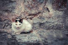Miserabel verdwaald katje met oude steenmuur op achtergrond en exemplaarruimte royalty-vrije stock fotografie