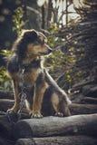 Miserable dog Stock Images