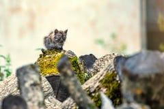Miserable stray kitten Stock Photography
