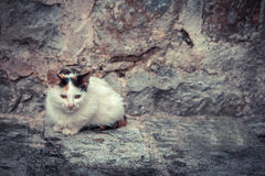 Miserable stray kitten with old stone wall on background and copy space royalty free stock photography