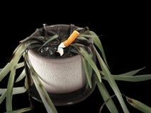 Mises à mort de fumage Images libres de droits