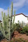 Misión española con el cactus Imagen de archivo libre de regalías
