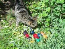 Misi dà uno sguardo più attento alle uova di Pasqua fotografie stock
