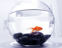miskę ryb Obrazy Stock