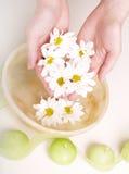 miska rąk kobiecej pełnej wody Fotografia Royalty Free