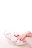 miska rąk kobiecej pełnej wody Zdjęcia Royalty Free