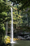 The Mexican waterfall, Misol-Ha, tumbles over a plant covered cliff. Royalty Free Stock Photos