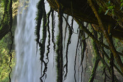 Misol-Ha waterfall, Chiapas, Mexico, Royalty Free Stock Image