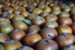 Mispelfrüchte ausgebreitet im Keller, um zu reifen stockfotografie