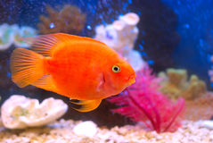 Miss Aquarium Stock Images