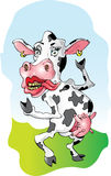 Miss Cow. This is Miss Cow; Check out her earrings Royalty Free Stock Images