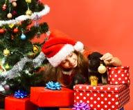 Miss Santa gives small gift to dogs near Christmas tree. stock photo