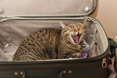 Miss You Already!. Kitties will lift you up and bring a smile.  I miss you already, and you haven't left yet Stock Image