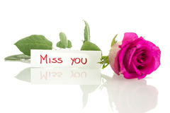 Miss you message. Beautiful pink rose lying on a desk with a Miss you card. Over white background Royalty Free Stock Image