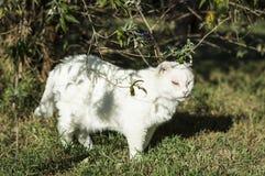 Missbrukad katt i cattery royaltyfria bilder