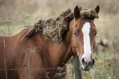 Missbrukad och eftersatt häst arkivfoto
