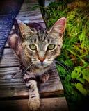Misser Kitty stock foto's