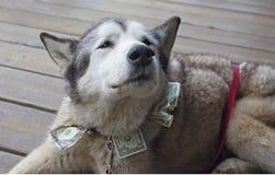 Misshandlad hund för lyfta för fond Arkivbilder