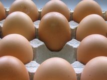 Missing Egg stock images