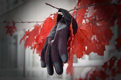 Missing glove. Glove suspended on a branch with bright red snow-covered leaves Stock Photography