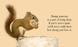 Missing Her. Inspirational quote on love by Helen Fielding with a young male squirrel holding on lovingly to a tiny antique picture frame with a picture of his royalty free stock photos