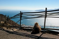 Missing the relatives. Monkey looks at the shore on Gibraltar, Missing the relatives, Evolution Stock Image