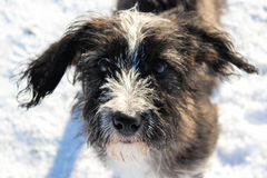 Missing You Stock Image