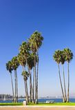 Mission Bay Palms Stock Image