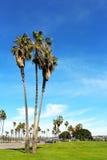 Mission Bay Park, San Diego, California. Trees standing at at Mission Bay Park, San Diego, California stock photo