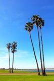 Mission Bay Park, San Diego, California. Trees standing at at Mission Bay Park, San Diego, California stock image