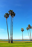 Mission Bay Park, San Diego, California. Trees standing at at Mission Bay Park, San Diego, California royalty free stock images