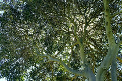 Mission Bay Park, San Diego, California. Trees standing at at Mission Bay Park, San Diego, California stock images