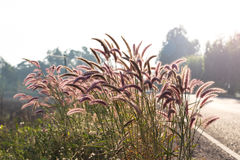 Mission Grass backlit street. Royalty Free Stock Image