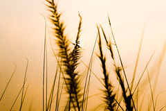 Mission grass Stock Images