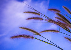 Mission grass and the blue sky Royalty Free Stock Photography