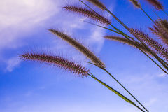 Mission grass and the blue sky Stock Photo